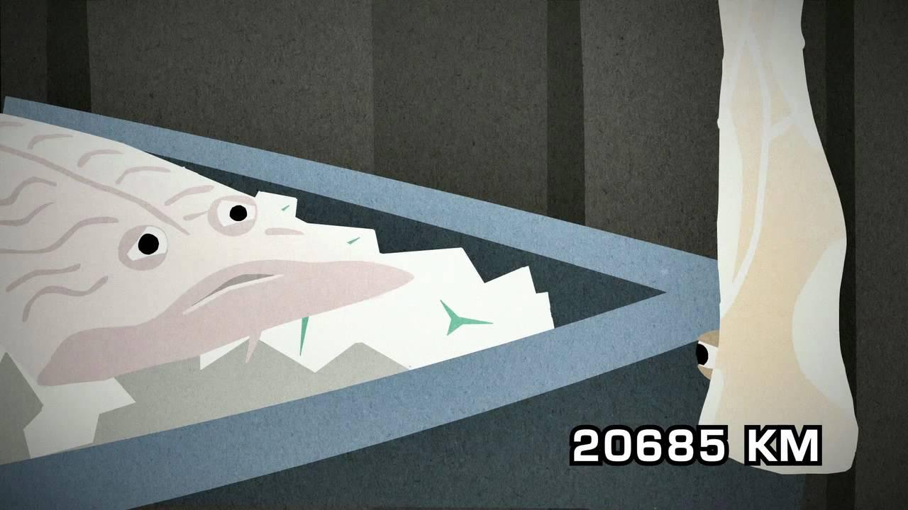 En fisks lange rejse