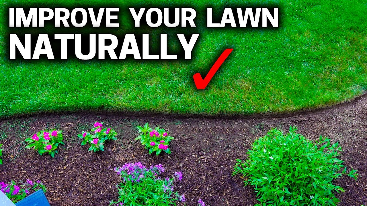 4 EASY WAYS To Keep Your LAWN GREEN & Healthy NATURALLY!