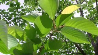 Everio GZ-HM330 green video 1