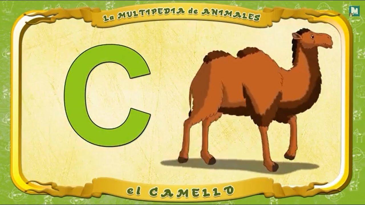 La multipedia de animales letra c el camello youtube for Pianta con la c
