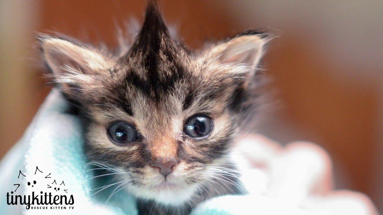 kitten tiniest kittens nano