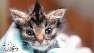 nano-the-tiniest-kitten-tinykittens-com