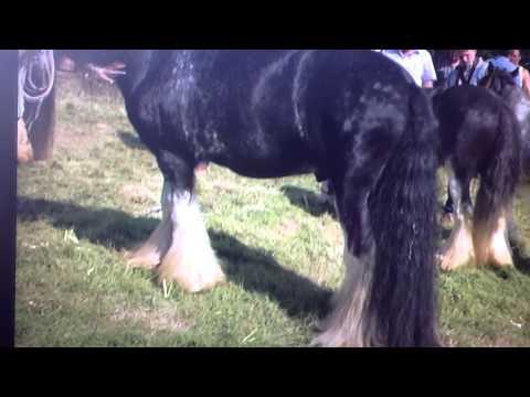 Peter Ash Gypsy Cobs - Millionaires Corner - Appleby Horse Fair 2013