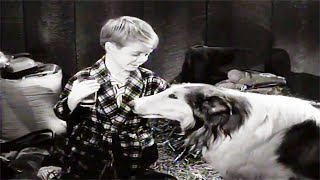 Lassie | Campout | Full Episodes | Kids Cartoon | Videos For Kids | Old Cartoon