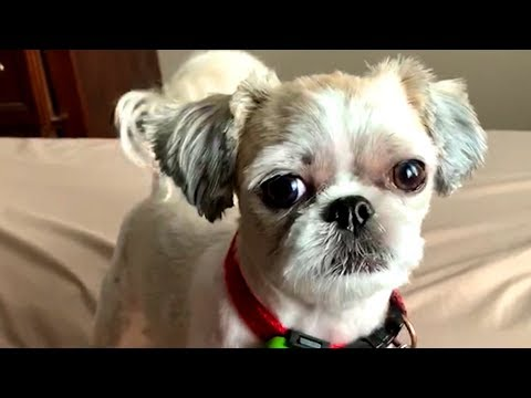 Funny Animals and Cute Pets Videos! 🐱🐶