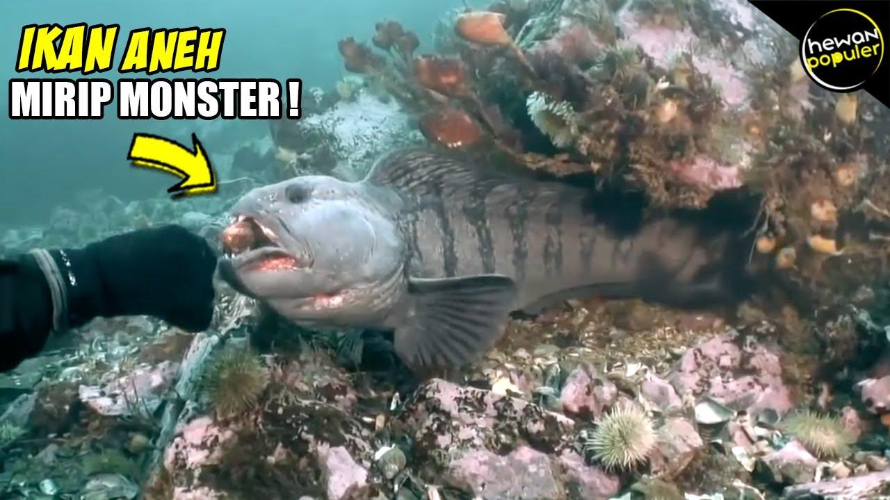 Download 53 Koleksi Gambar Ikan Paling Aneh Terpopuler
