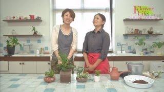 素敵にフラワーライフ 「水耕栽培の観葉植物作り」
