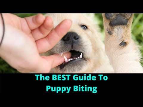 (Bite Inhibition) Dog Training: How To Stop A Puppy From Biting And Train Dogs Not To Bite