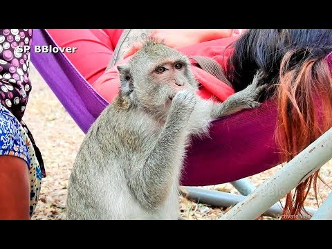 Small Monkey Worry Sasha Carry Newbaby Upside Down - SP BBlover - Jessie Hurt Cry from YouTube · Duration:  10 minutes 30 seconds