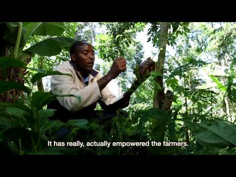 Fairtrade's impact on farmers and workers - Fairtrade tea in East Africa