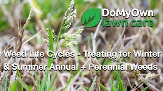 Weed Life Cycles - Treating for Winter Annuals, Summer Annuals & Perennial Weeds