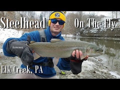 WBD - Steelhead On The Fly,  Elk Creek PA, Nymphing,  Trout Yeah Flies