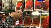 Купить семена редиса вы можете в супермаркете семян № ➀. Большой выбор. Цена снижена!. Селеста f1 семена редиса раннего (enza zaden).