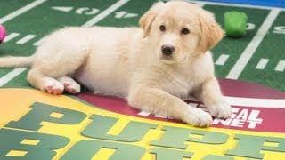 Puppy Bowl Ix Mvp - The Winner Is. . .