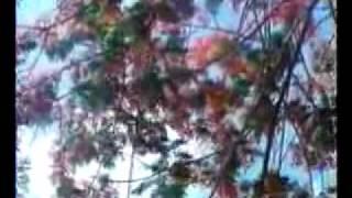 Download Hindi Video Songs - Amar Swapno Tumi