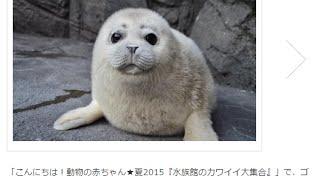 水族館で、動物の赤ちゃんがキュート過ぎ!水族館の秘蔵映像公開 8月19...