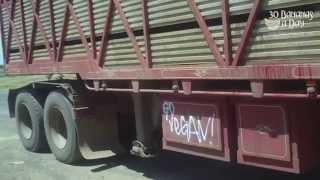 Custom Vegan Road Train