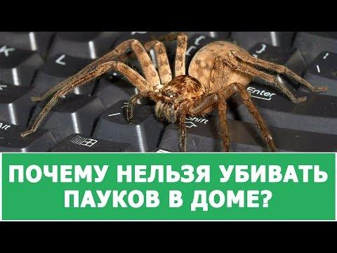 Вопрос: Почему в доме много пауков?