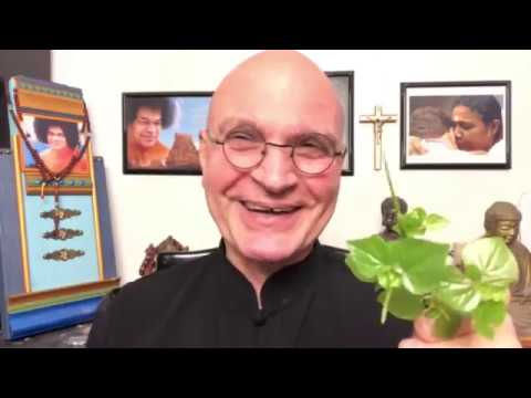"""Amazing Health Benefits of Pepper Elder Plant"""
