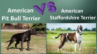 American Pit Bull Terrier VS American Staffordshire Terrier  Breed Comparison