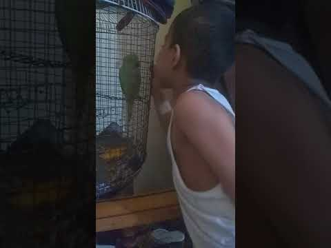 Bolne wala tota Jo ki abcd bolta h    ...   Parrot talk little bit A B C ....very good taking....