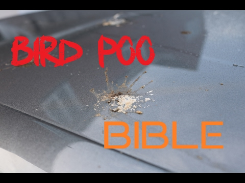 How To Remove Bird Poo Droppings From Cars