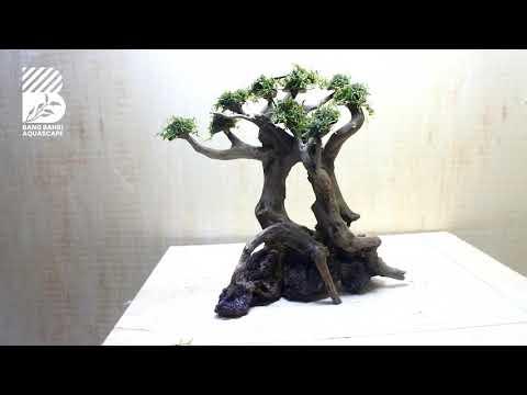 project-06-||-bonsai-aquascape-sederhana
