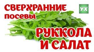 Сверхранние посевы. Сеем рукколу и салат. Оригинально