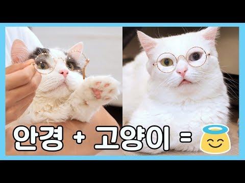 고양이가 안경쓰면 얼마나 귀엽게요~? 😍