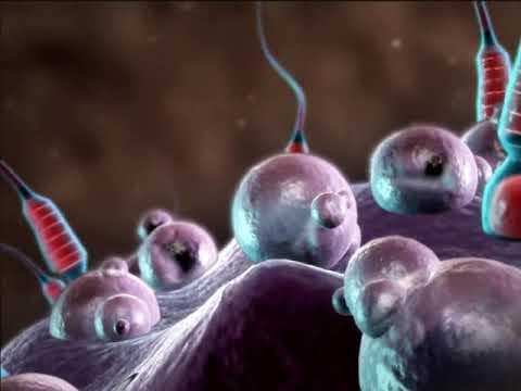 Media Video Pembelajaran Pembuahan (Bertemunya Sel sperma dan Sel telur)