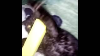 Кот кусает