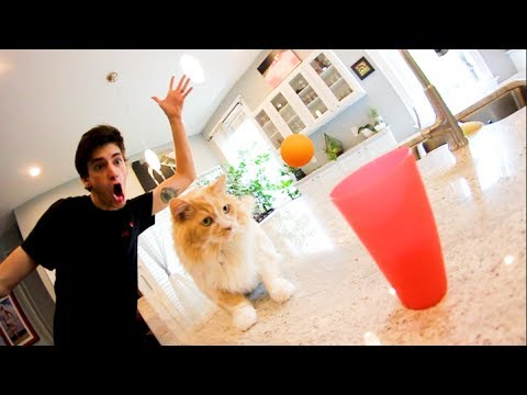ULTIMATE CAT TRICK SHOTS!