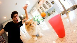 ULTIMATE CAT TRICK SHOTS!