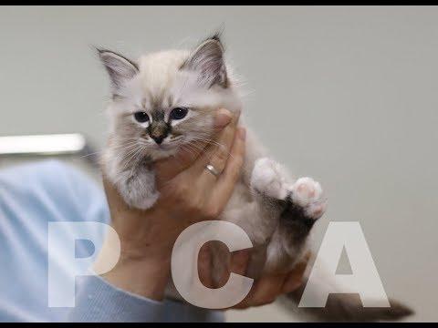 Вопрос: Какие котята бывают на выставке кошек?