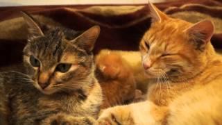 Папа мама и котенок