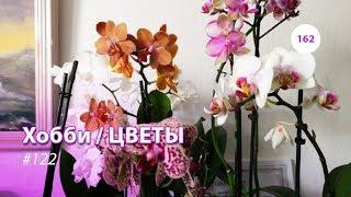 162#122 / Хобби Цветы / ОРХИДЕИ НА ДЕНЬ РОЖДЕНИЯ И 8 МАРТА