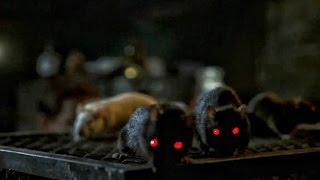 5 Причин бояться крыс