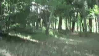 早稲田祭にジブリがやってくる! 『全日本ジブリ王決定戦』 2008年11月3...
