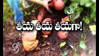 Sweet Potato And Cotton Cultivation - Eruvaka - 02-08-2014 - 99tv