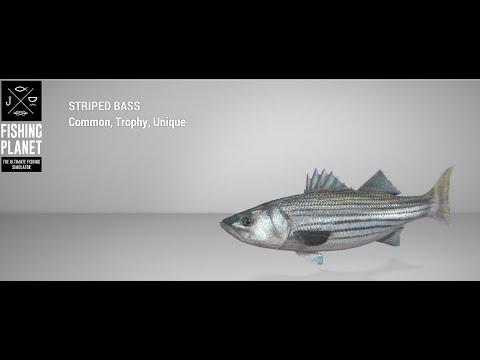 Fishing Planet -