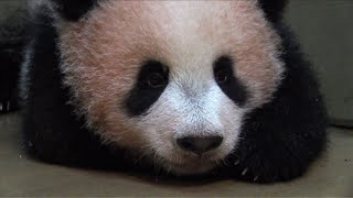 Tokyo panda cub marks 150 days