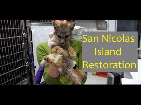 San Nicolas Island Restoration