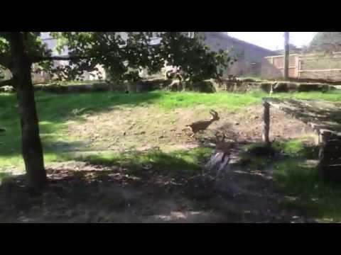 Dorcas Gazelle Racing at Chessington World of Adventures Resort
