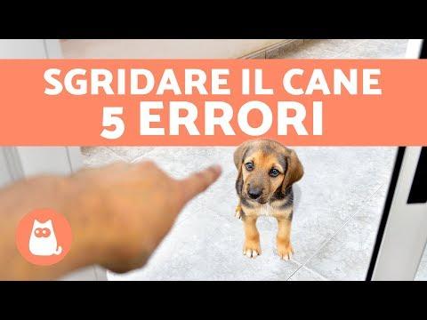 5 ERRORI da non fare quando si SGRIDA il cane – Cani che chiedono scusa