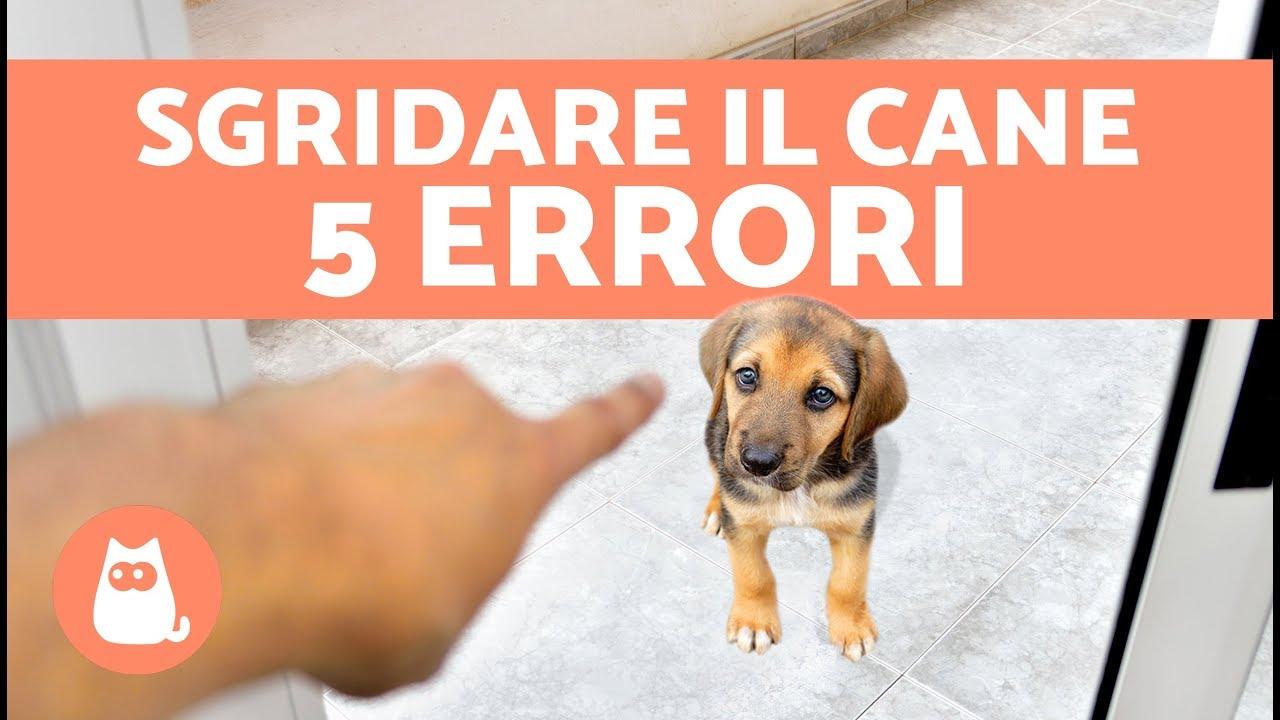5 errori da non fare quando si sgrida il cane cani che for Cani che non vogliono fare il bagno