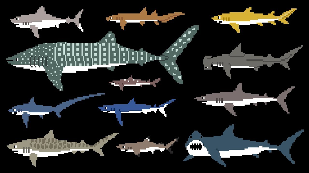 Sharks (8-Bit) - Learn Animals - Great White Shark - The Kids' Picture Show (Fun & Educatio
