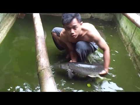busyet!! iwak boyo ikan aligator gede banget