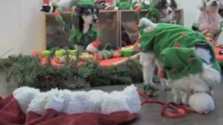 muttville senior dog rescue presents a christmas tail