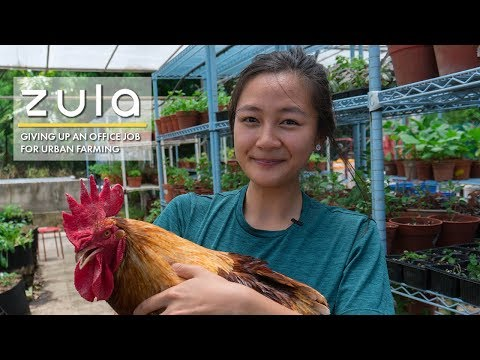 Left Corporate Job To Be A Farmer In Singapore: Kimberly Hoong | ZULA Features | EP 13