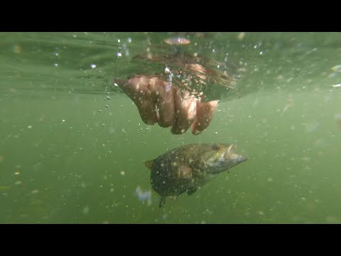 ULTRA CLEAR Water Fishing For BIG BASS!--Green Lake Fishing